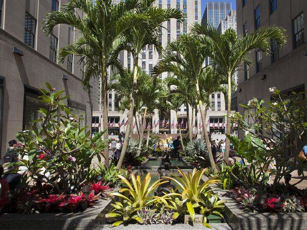 A view of the trees, greenery, and pond in front of Rockefeller Center in the Channel Gardens.