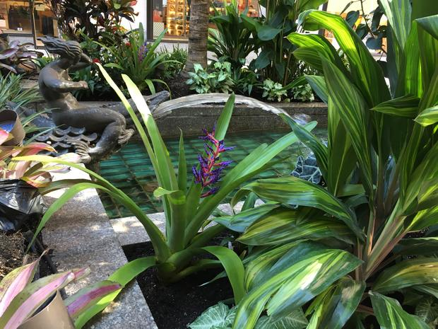 A view of green plants in front of a pond at the Channel Gardens at Rockefeller Center.