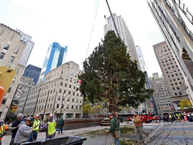 A close-up of the Rockfeller Center Christmas tree arrival and installation.