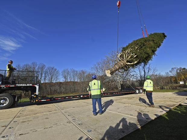 Rockefeller Center Christmas tree being lifted on to the truck.