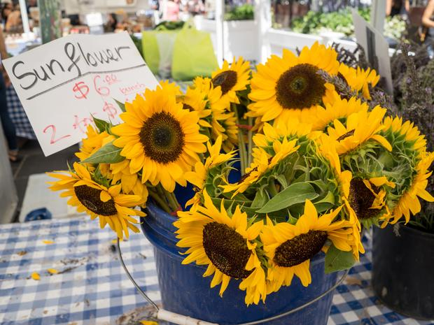 A blue tin at the Rockefeller Center Greenmarket holding beautiful yellow sunflowers for sale.