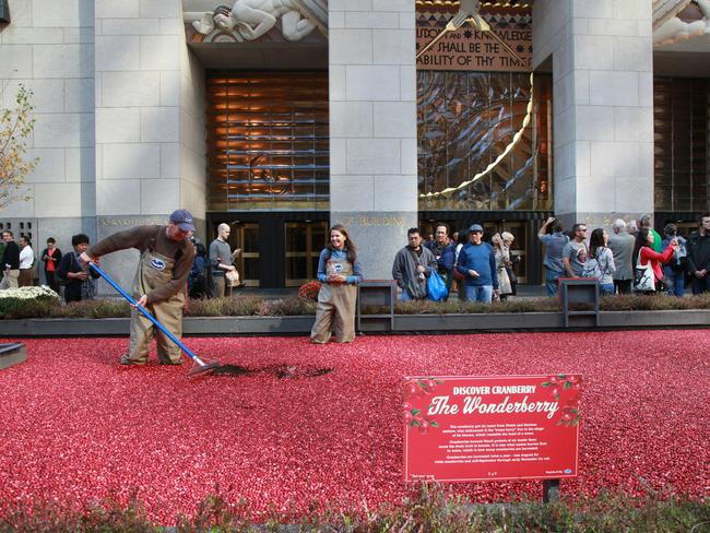 The Cranberry Bog Returns