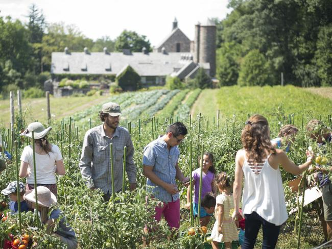 Summer at Stone Barns